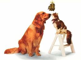 dog-and-cat-mistletoe